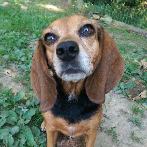 . LB (Little Beagle) .