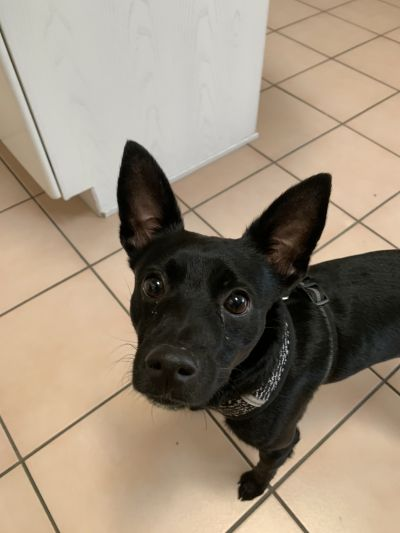 Pets For Adoption At Marion Grant County Humane Society In Marion In Petfinder