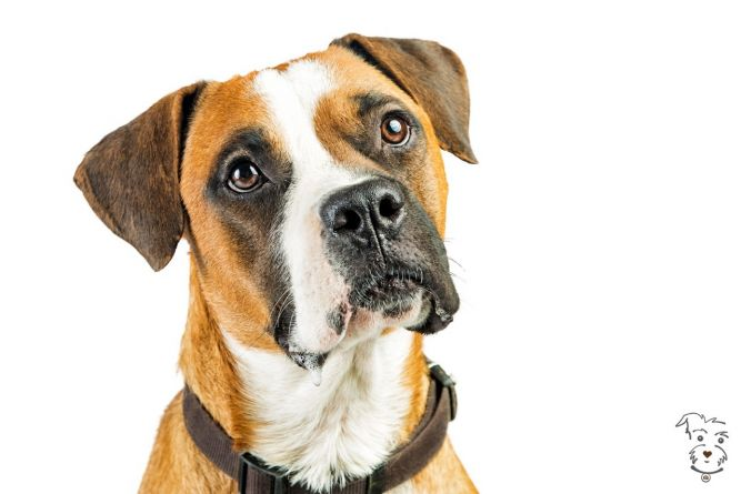 Luv of Dogz Fund, Inc