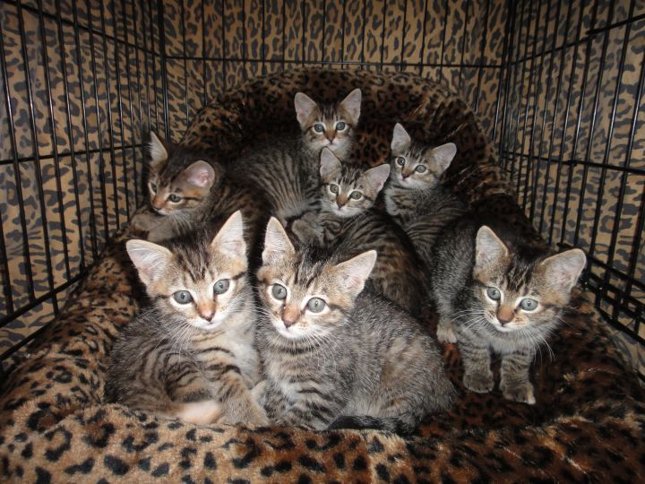 Donate To Local Spay Neuter Funds!