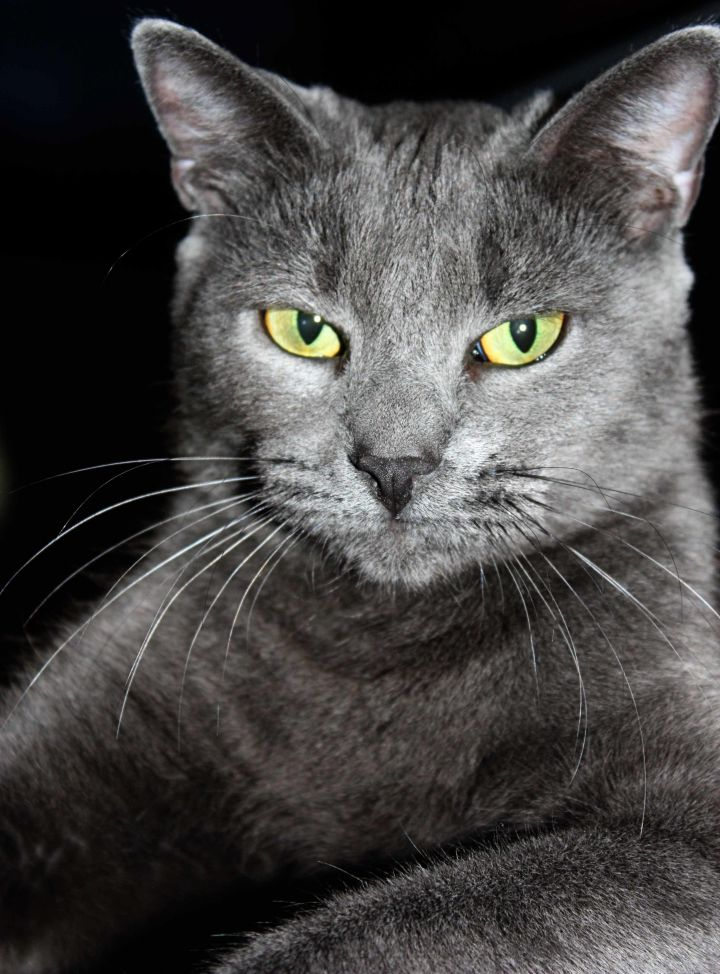 All Cats Are Beautiful When Well Cared For