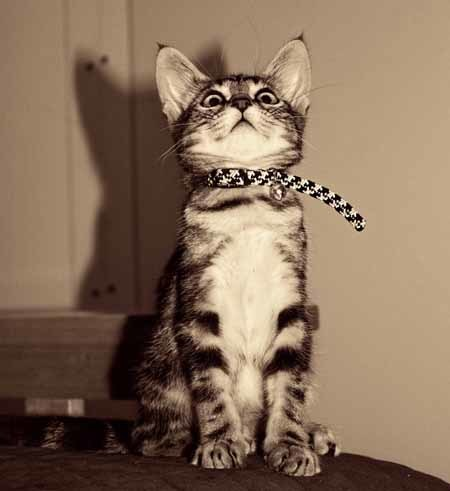 Always Collar, Tag and Microchip Your Pets!