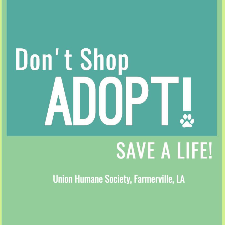 Don't Shop, Adopt!