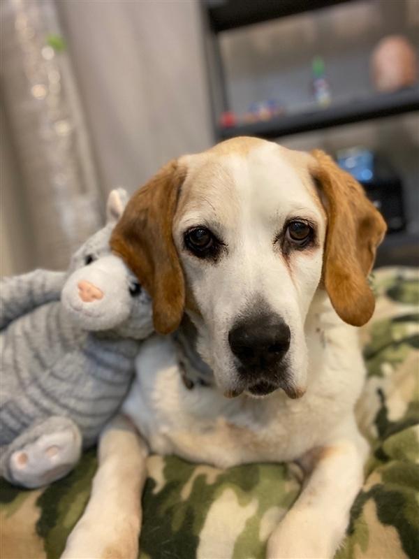 Senior Dogs for Adoption