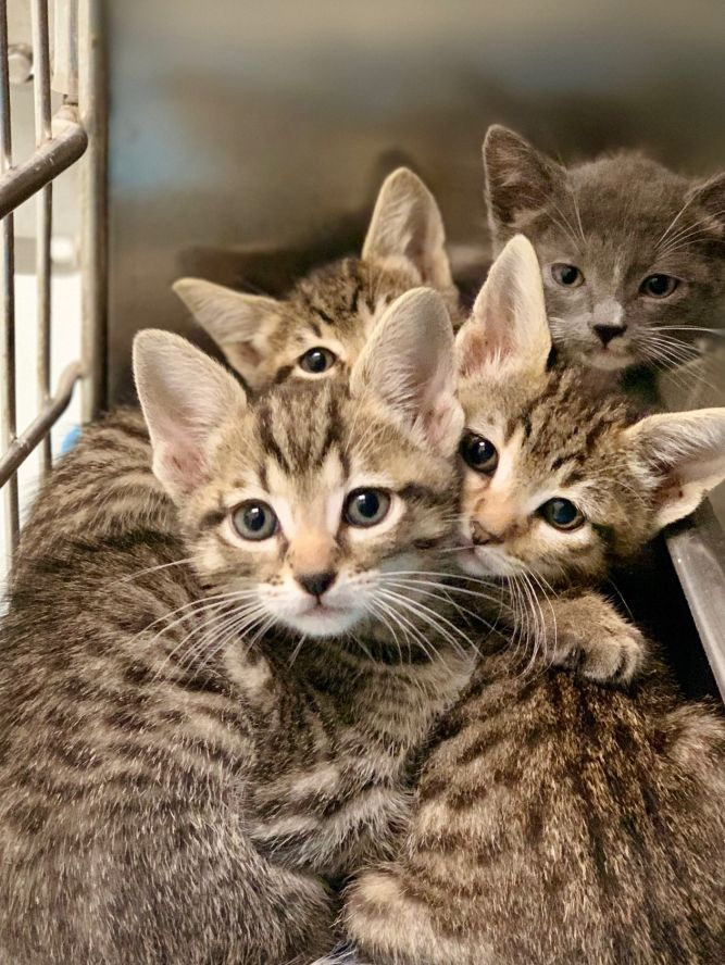 Pasadena Animal Shelter & Pet Adoption Center