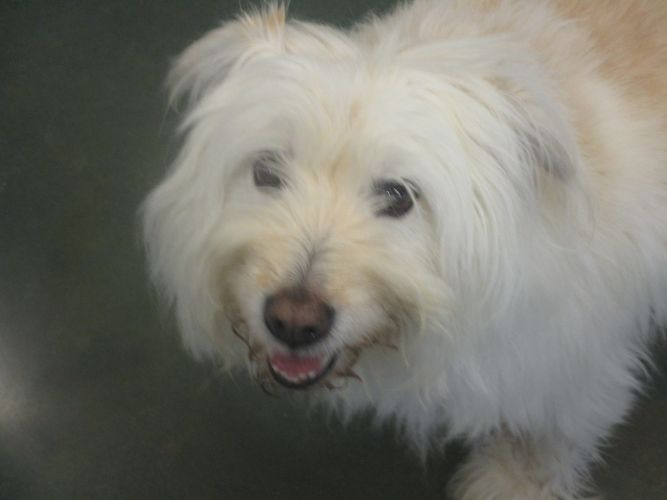 Pets For Adoption At City Of Crowley Animal Shelter In Crowley