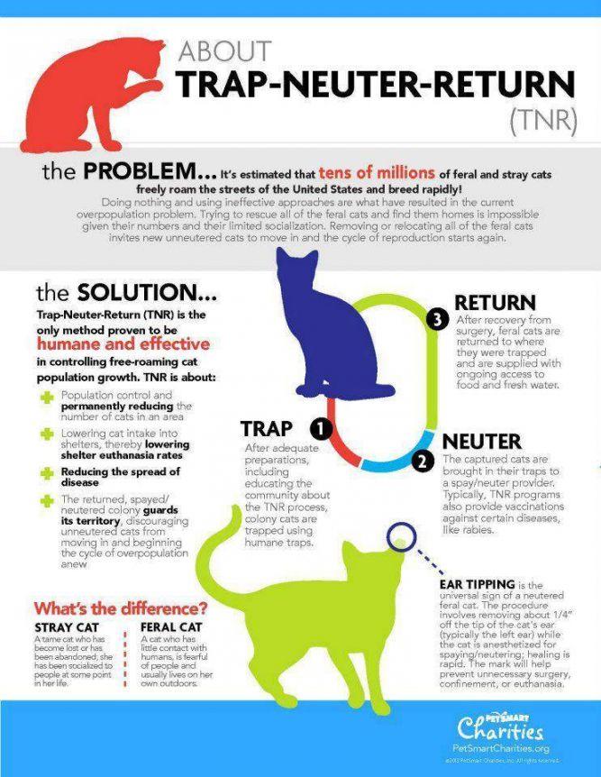 Forgotten Felines Inc.