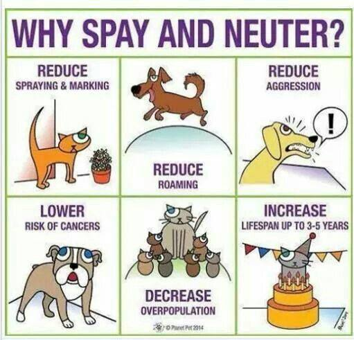 Why Spay Neuter?