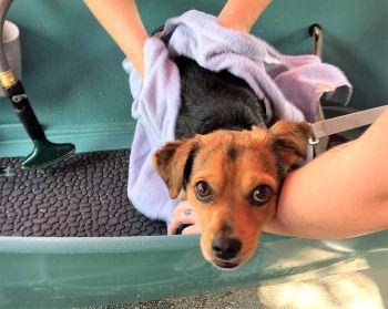 Off-Shelter Dog Wash Fund Raisers