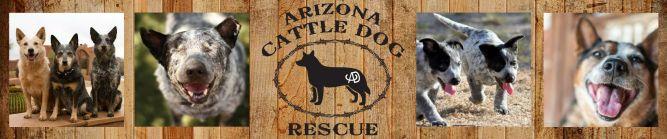 Arizona Cattle Dog Rescue