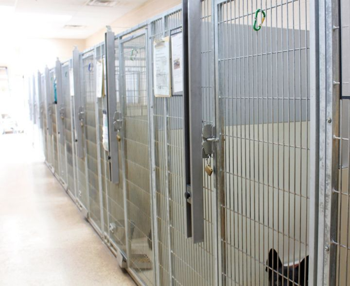 Our indoor/outdoor dog kennels