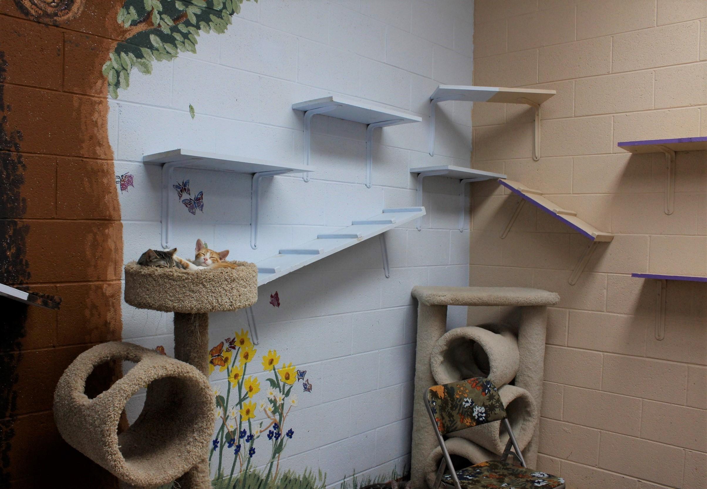Our kitten room