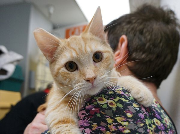 kitty at the adoption site