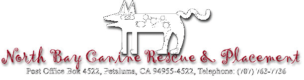 North Bay Canine Rescue & Placement