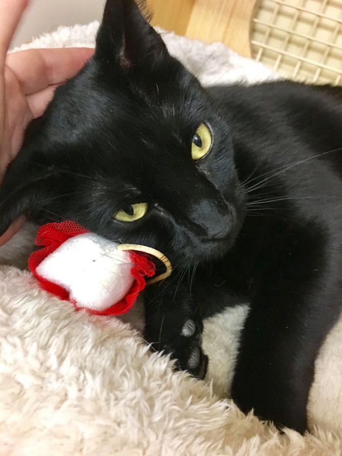 OCSP Cat Rescue