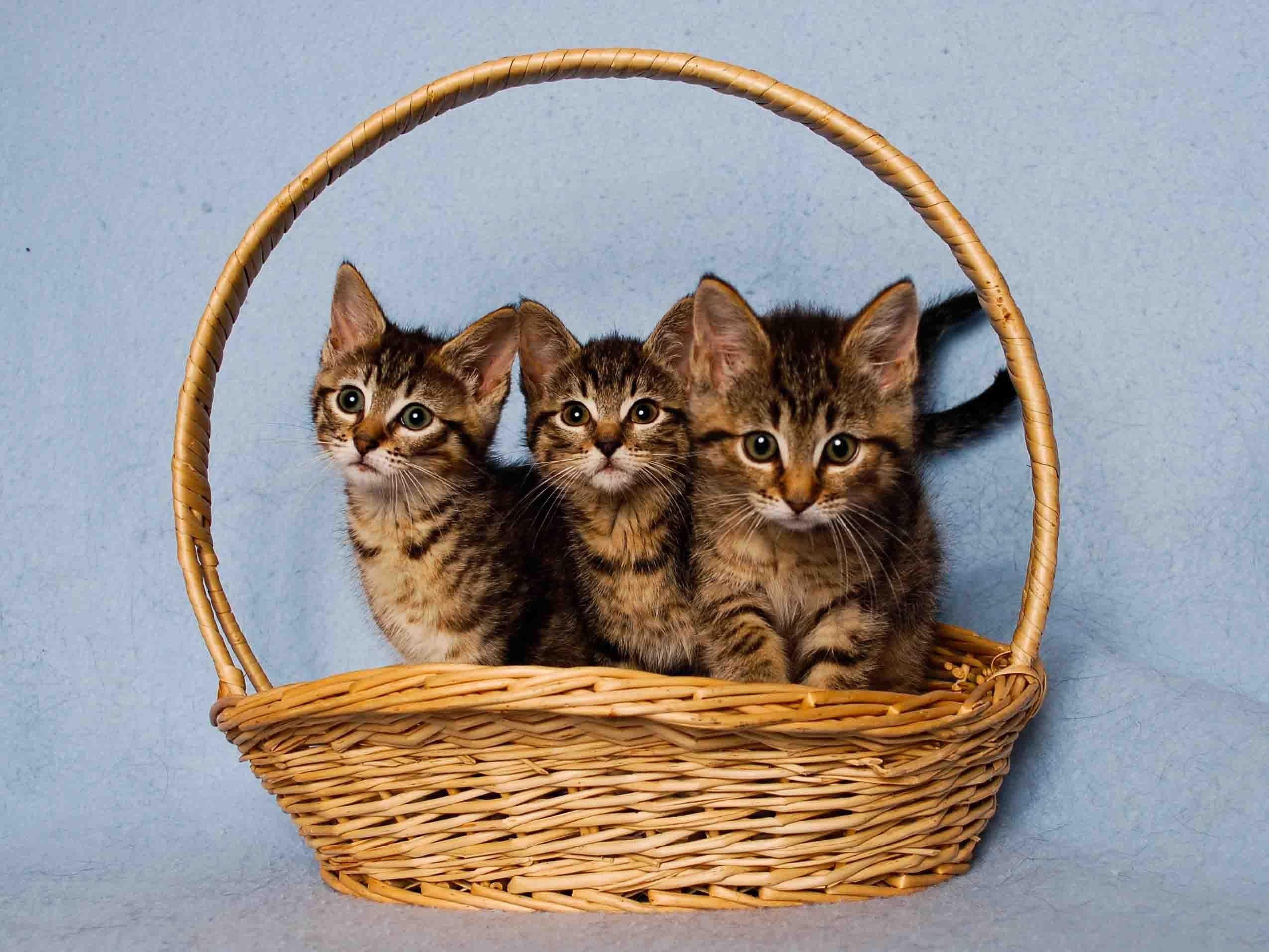 Pets For Adoption At Santa Cruz County Animal Shelter In Santa Cruz Ca Petfinder