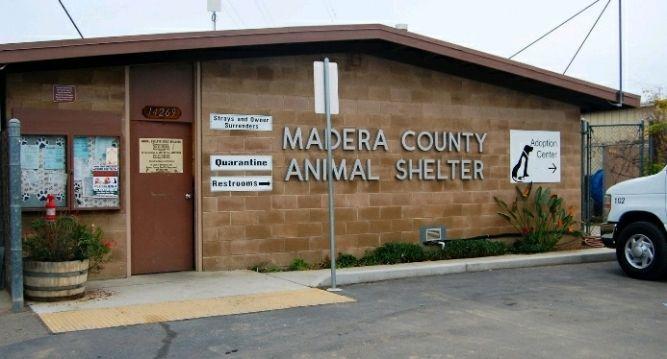 Madera County Animal Control