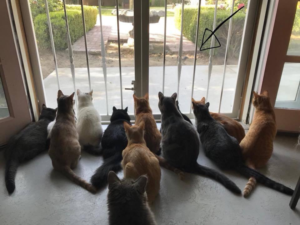 Adoptable cats enjoying the cat cottage door.