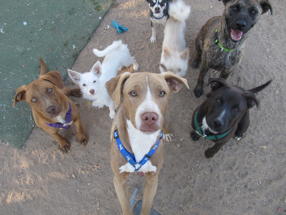 Happy dogs for adoption!!!