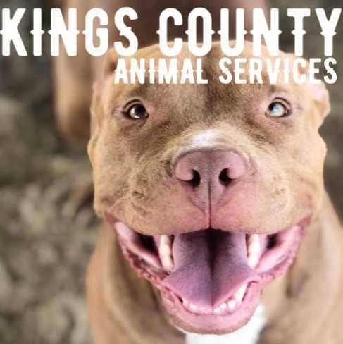 Kings County Animal Services