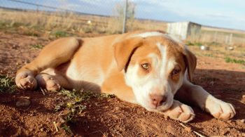 Little Reservation Puppy