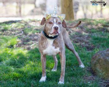 Adopt-A-Dog super dog Leo.