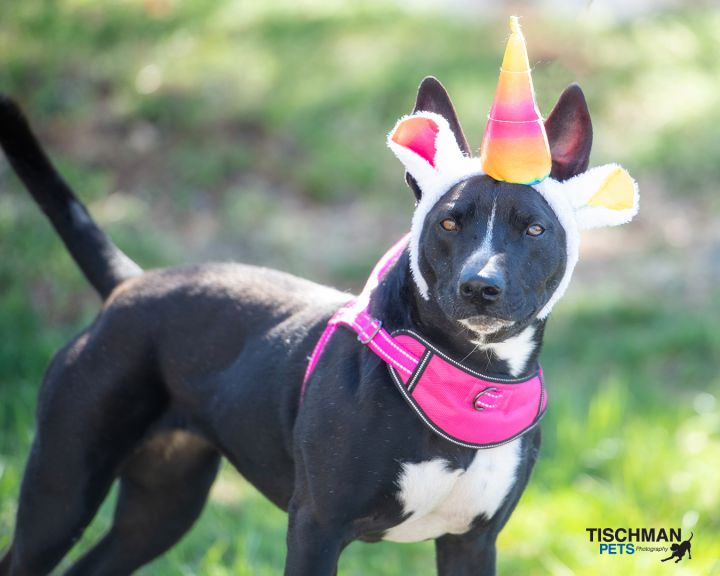 Our of unicorn dogs Raven.