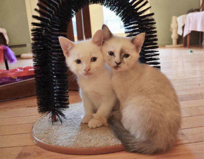 Forgotten Felines, Inc.