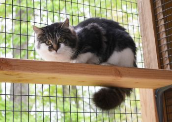 """Our shelter features five rooms and four """"catios""""."""