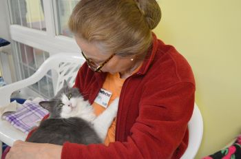 Our shelter is run entirely by volunteers.