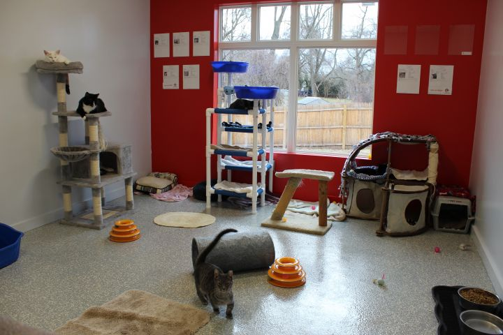 Just one of our cat rooms