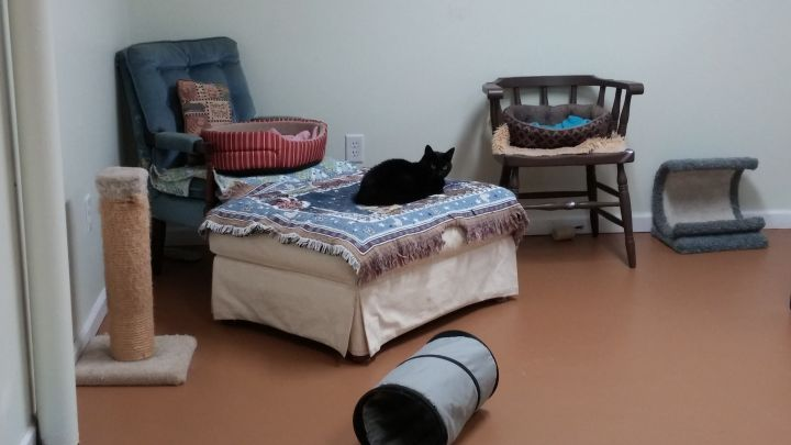 One of our quiet cat rooms