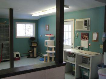 Main cat room