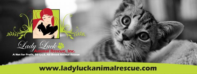 Lady Luck Animal Rescue