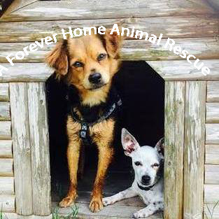 A Forever Home Animal Rescue, Inc