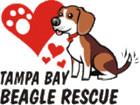 Tampa Bay Beagle Rescue Inc