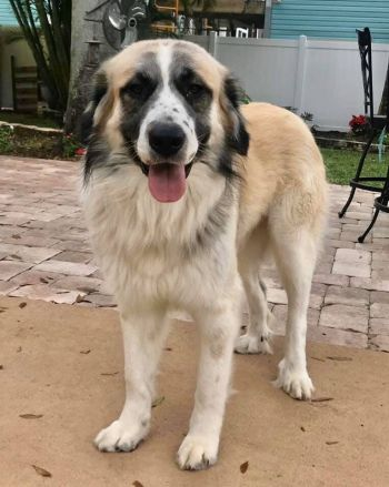 FARR is a large/giant breed rescue
