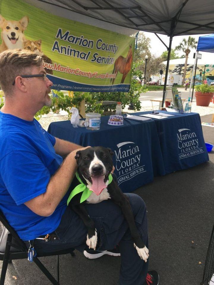 Outreach adoption events