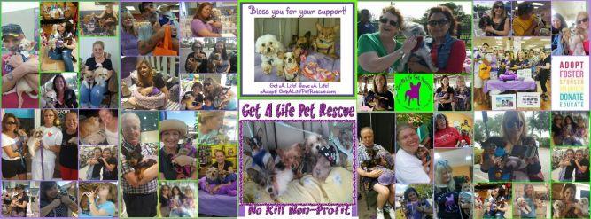 GET A LIFE PET RESCUE/S.Fl.Pet Rescue & Rehab. Inc.
