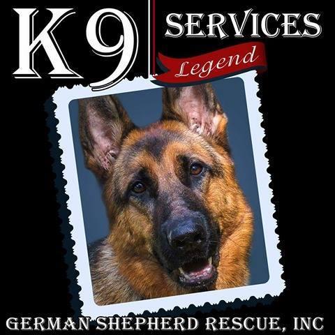 K-9 Services German Shepherd Rescue