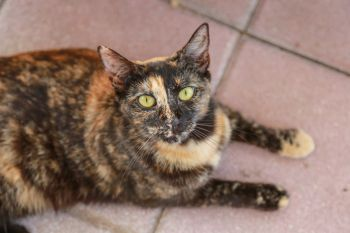 APR has about 150 adoptable cats.
