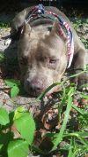 1 Lucky Dog Rescue, Inc.