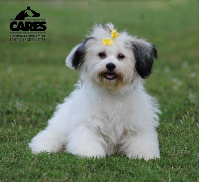 Cedartown Animal Rescue, Education & S