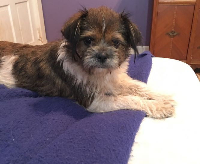 Atlanta Canine Adoption Project