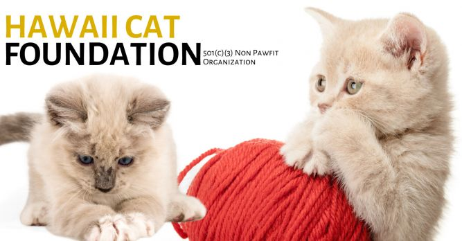 Hawaii Cat Foundation