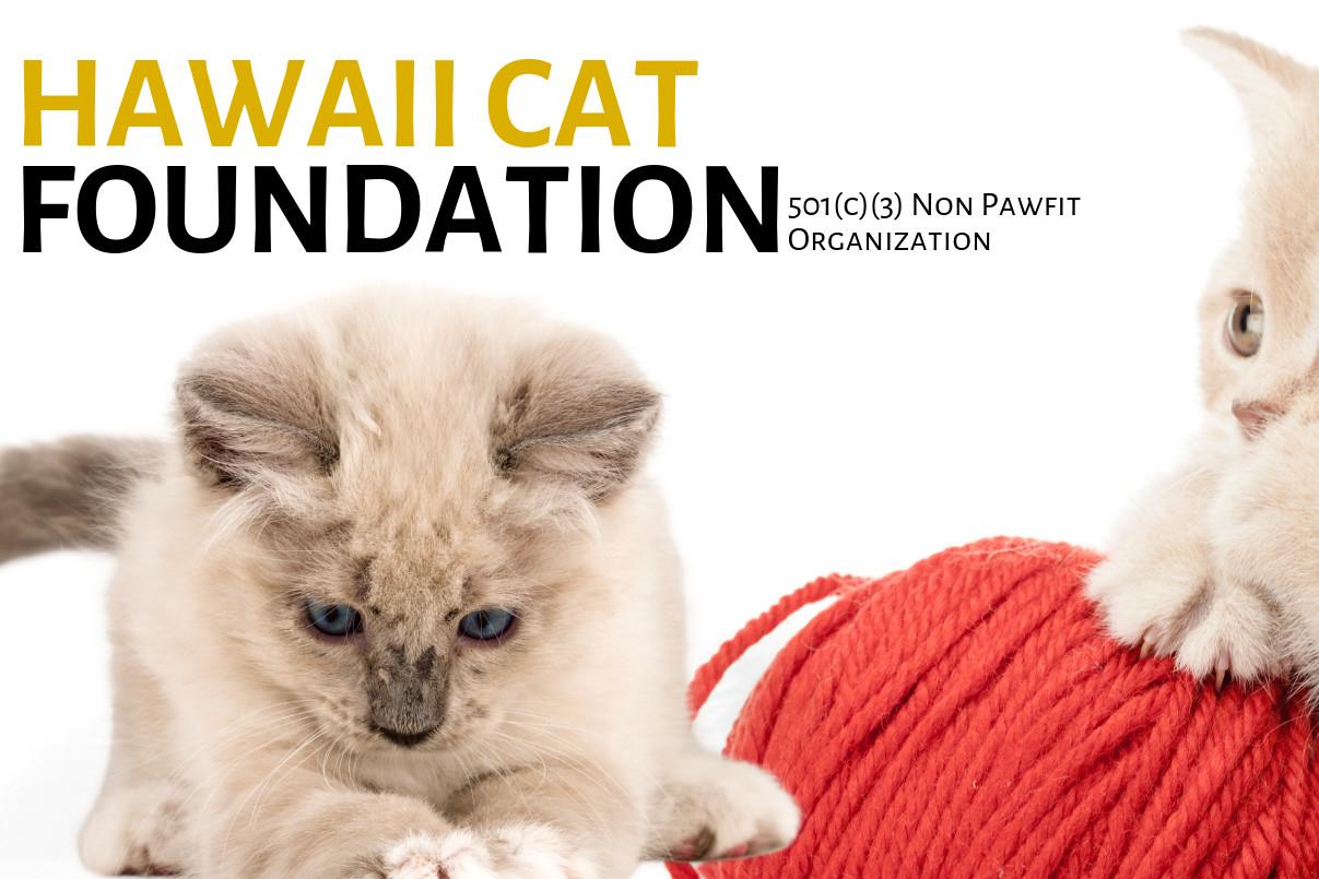 Pets For Adoption At Hawaii Cat Foundation In Honolulu Hi Petfinder