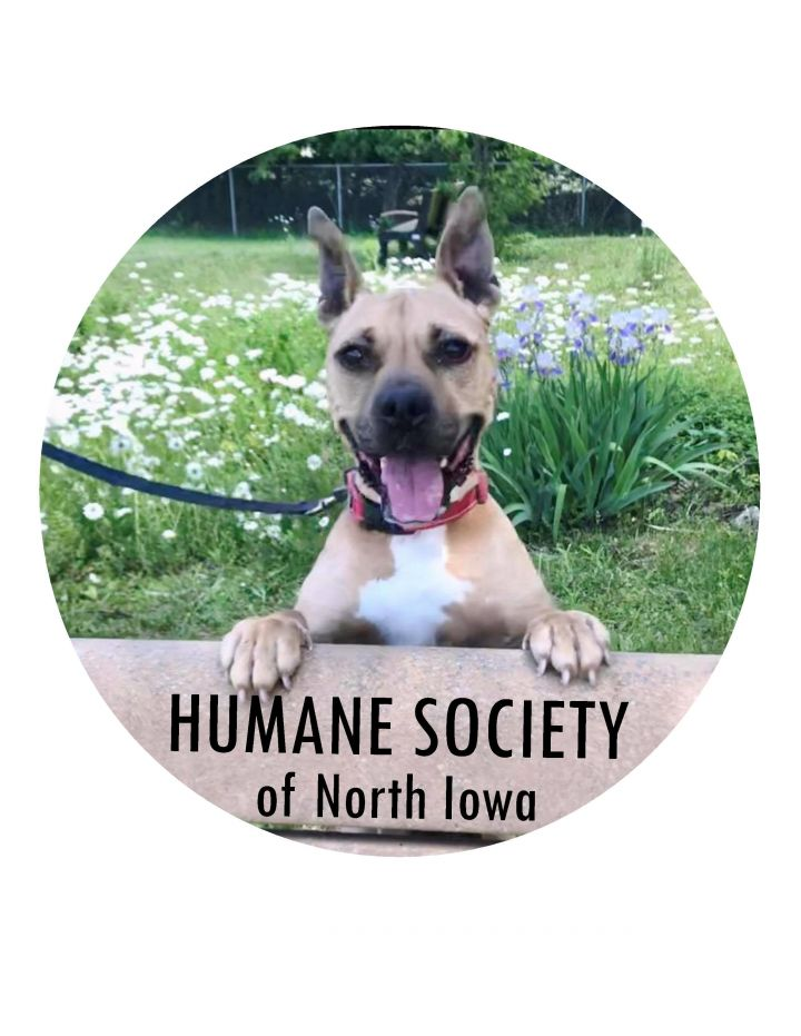 Welcome to the Humane Society of North Iowa!