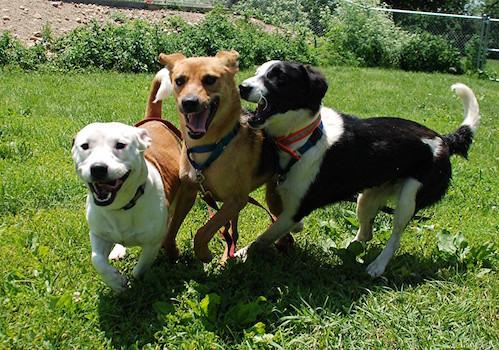 Play group fun!