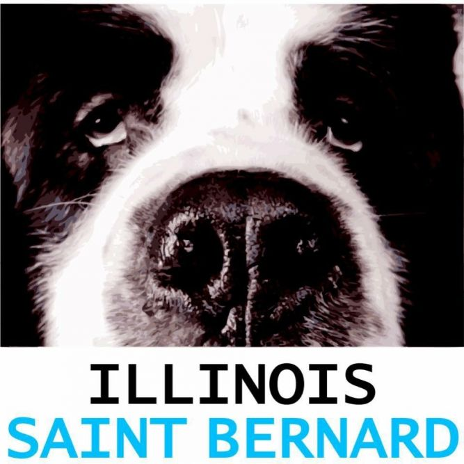 Illinois Saint Bernard Rescue