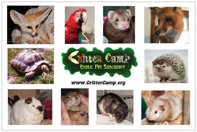 Critter Camp Exotic Pet Sanctuary